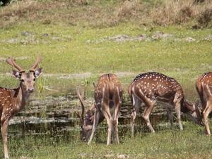 Day Tour to Wilpattu National Park Fotos