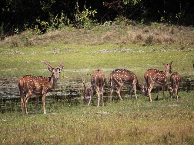 Day Tour to Wilpattu National Park Photos