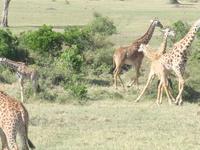 3 Days Masai Mara Budget camping tour 2019 offers
