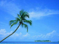 Munnar, Thekkady, House Boat and Kovalam Package