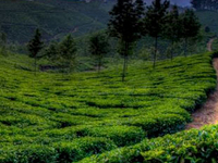 Munnar and Thekkady Package