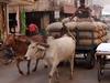 Cultural Tour India