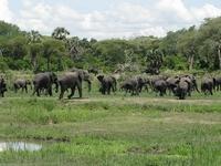 Wildlife Safaris, 2boys Tours
