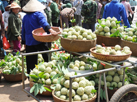 Harvest Fruit In Lang Son 1
