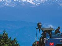 Rejoice In Darjeeling