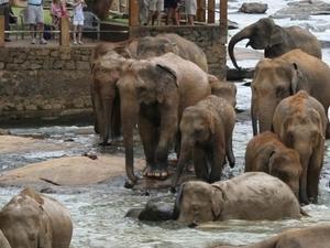 6 Days in Sri Lanka Photos