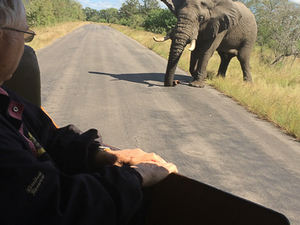 Day Tours to Kruger National Park Photos