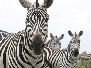 Weekly Nairobi National Park Guided Tours