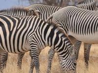 Monthly Safari Group Depatures
