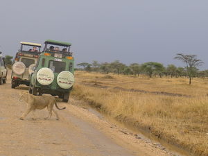 Safari And Cultural Tourism Photos