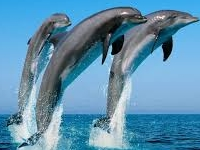 Whale & Dolphin Watching in Sri Lanka