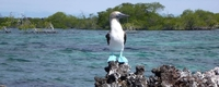 Galapagostours