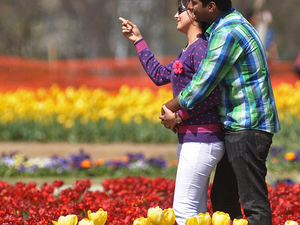 Delight Kashmir - Couple Package