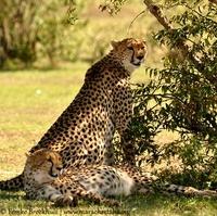 Trailfinders Safaris