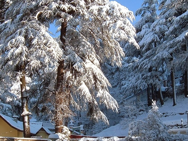 Special Shimla & Manali Winter Package Photos