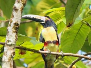 Rainforest Trekking: Indio Maiz Reserve - Nicaragua