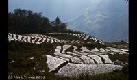 Rice Fields, Sapa