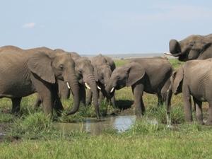 3 Days Amboseli BestWay