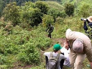 Gorilla and Wildlife Uganda Photos