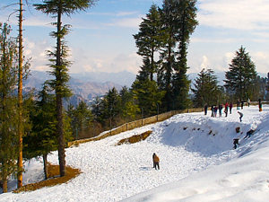 Exotic Himachal Couple Honeymoon Package Photos