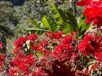 Blooming Season