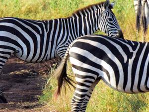 Selous & Mikumi Safari Photos