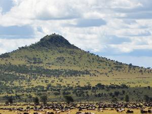 Luxury Serengeti Migration Safari Photos