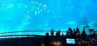Aquarium Big Screen