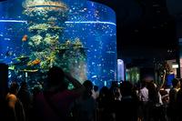 Singapore Aquarium Tourists
