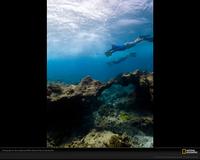 Divers Ocean Xl