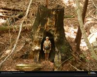 Redwood Hollow 2868 Xl