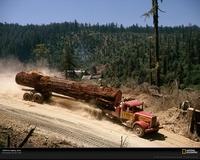 Tree Truckload 816224 Xl