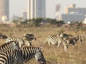 Spectacular Kenya Beach & Bush Safari Holiday
