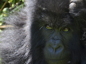 3 Days Gorilla Tracking In Bwindi Photos