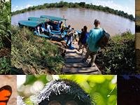 Deep Rainforest Experience, Peru