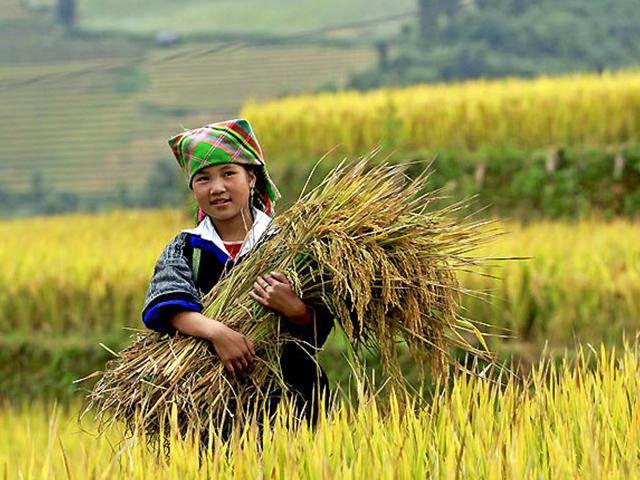 Vietnam tour 3 World Heritages in 7 Days Photos