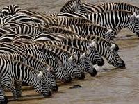 Maasai Mara - The 8th Wonder