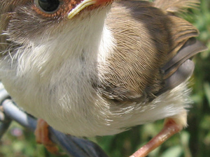 Bird Watchers Paradise Safari From Nairobi Photos