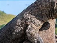 Fun Attraction Tour to Komodo Indonesia