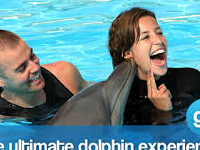 Dophin Encounters Fun
