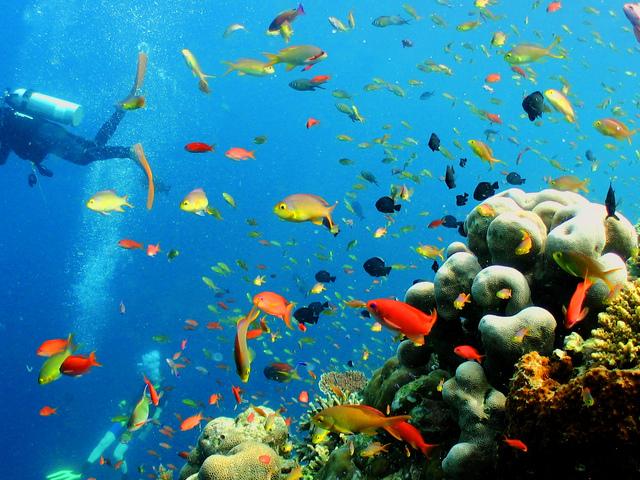Bodrum Excursions Scuba Diving Photos