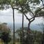 Preah Vihear - Tree