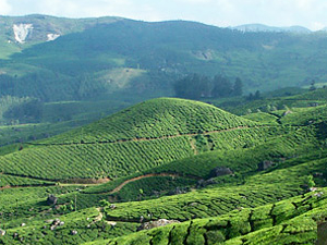 Kerala Luxury Trip Photos