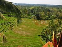 Rice Terraces Bali 6 By Worldpitou