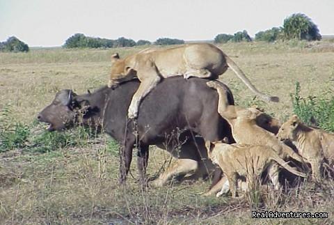 9days adventure camping safari Photos