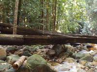 Soft Jungle Trekking