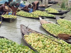 Guava Garden visit in Bangladesh