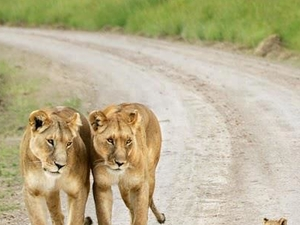 Tarangire, Manyara & Ngorongoro Safari