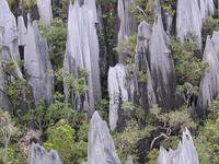 Pinnacles Mulu National Park