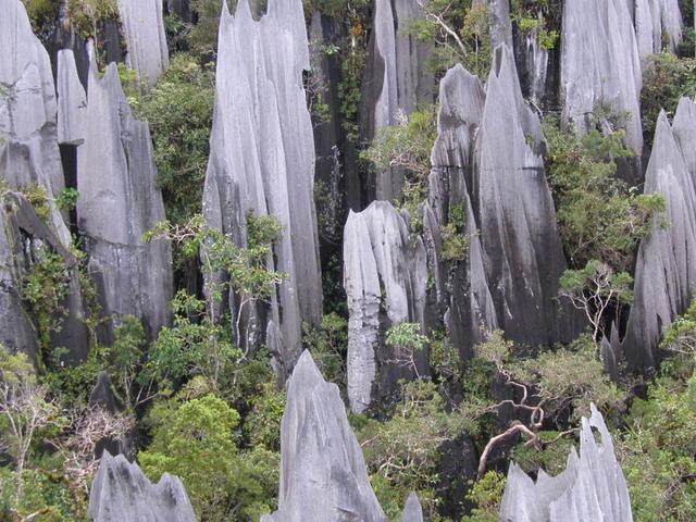 Pinnacles Mulu National Park Photos